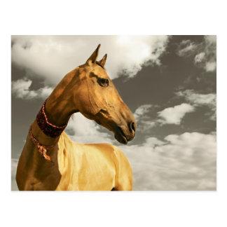 Golden horse of Turkmenistan Postcard