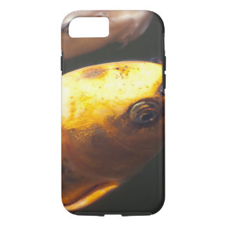 Golden Koi Fish iPhone 7 Case