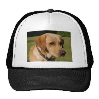 Golden Labrador Cap