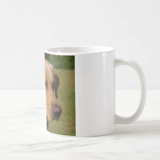 Golden Labrador Mugs