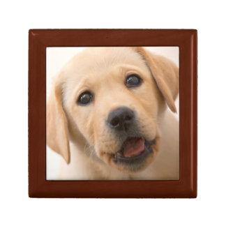 Golden Labrador Puppy (8 Months Old) Gift Box