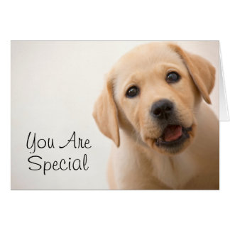 Golden Labrador Puppy (8 Months Old) Greeting Card