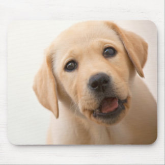 Golden Labrador Puppy (8 Months Old) Mouse Mat