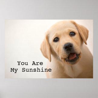 Golden Labrador Puppy Poster