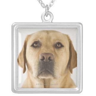 Golden Labrador Retriever (Canis familiaris). Silver Plated Necklace