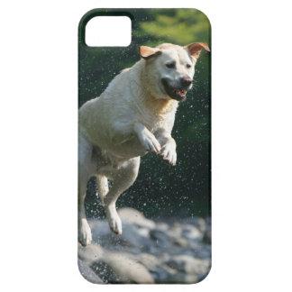 Golden Labrador Retriever jumping into river iPhone 5 Cover