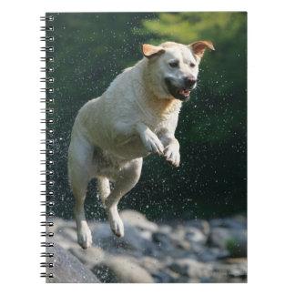 Golden Labrador Retriever jumping into river Notebook
