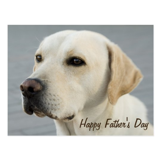 Golden Labrador Retriever Photograph Father's Day Postcard