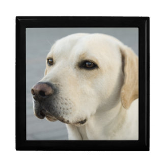 Golden Labrador Retriever Photograph Gift Box