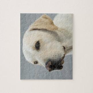 Golden Labrador Retriever Photograph Jigsaw Puzzle