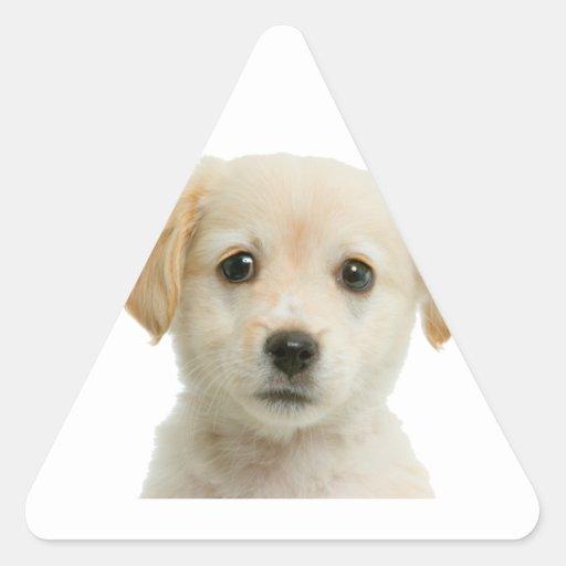 Golden Labrador Retriever Puppy Triangle Stickers