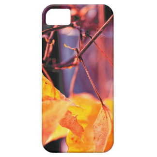 Golden Leaf iPhone SE + iPhone 5/5S Case For The iPhone 5