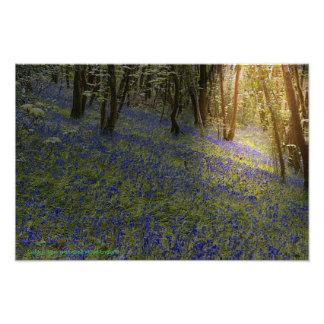 Golden Light In Bluebell Wood Photo Print