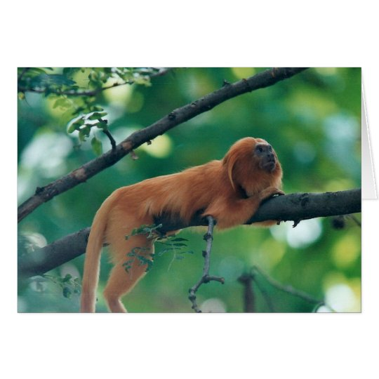 GOLDEN LION TAMARIN MONKEY GREETING CARD
