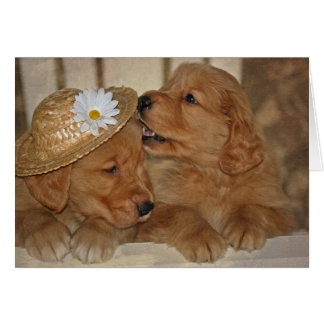 Golden Love for Anniversary Greeting Cards