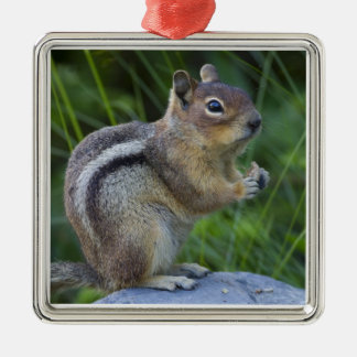 Golden Mantled Ground Squirrel Christmas Ornament