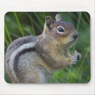 Golden Mantled Ground Squirrel Mouse Mat