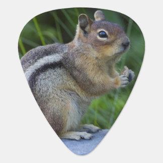 Golden Mantled Ground Squirrel Plectrum
