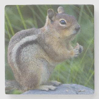 Golden Mantled Ground Squirrel Stone Coaster