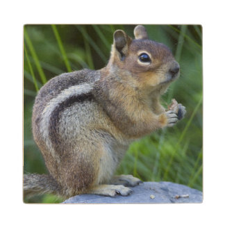 Golden Mantled Ground Squirrel Wood Coaster