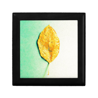 Golden Mint by JP Choate Gift Box