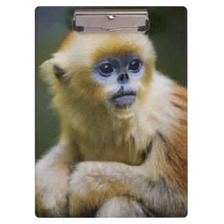 Golden monkey clipboard