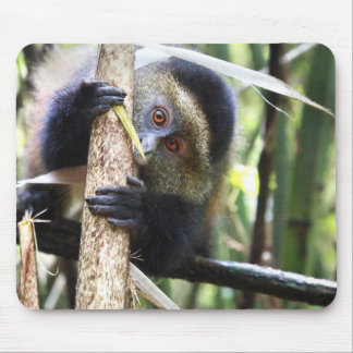 Golden Monkey in African Jungle Mouse Mat