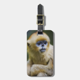 Golden monkey luggage tag