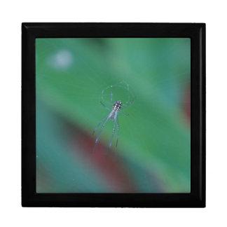 Golden Orb Spider Gift Box
