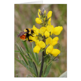 Golden Pea Greeting Cards