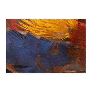 Golden Pheasant Feather Abstract Acrylic Wall Art