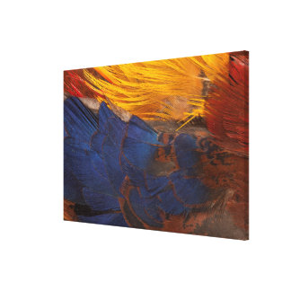 Golden Pheasant Feather Abstract Canvas Print