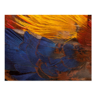 Golden Pheasant Feather Abstract Postcard