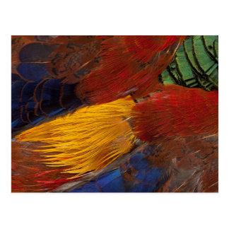 Golden Pheasant Feather Design Postcard