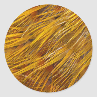 Golden Pheasant Feathers Close Up Classic Round Sticker