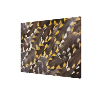 Golden Plover Feathers Canvas Print