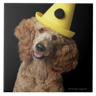 Golden Poodle Dog wearing a yellow clown hat Large Square Tile