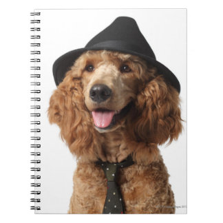 Golden Poodle Dog wearing Hat and Tie Notebooks