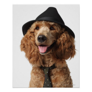 Golden Poodle Dog wearing Hat and Tie Poster