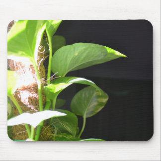 Golden Pothos in the Sunlight Mouse Mat