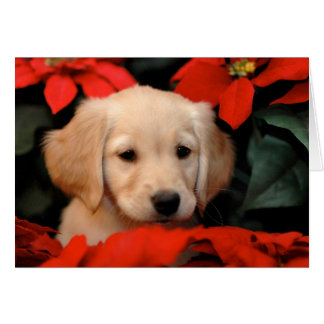 Golden Puppy and Poinsetta Christmas Card