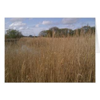 Golden reed bed at Hickling Broad, Norfolk Card