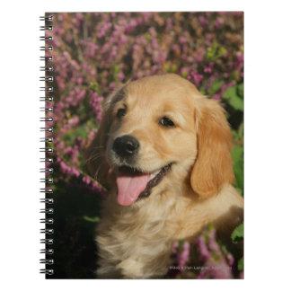 Golden Retreiver Puppy Notebook