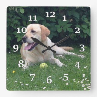 Golden Retreiver Square Wall Clock