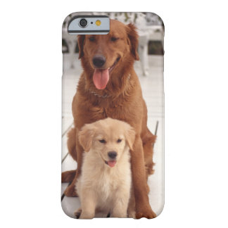 Golden Retriever 2 Barely There iPhone 6 Case