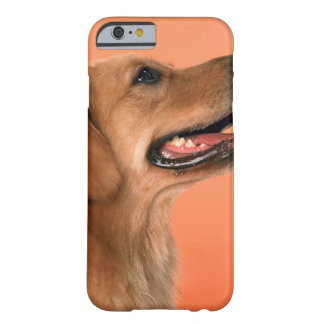 Golden Retriever 7 Barely There iPhone 6 Case