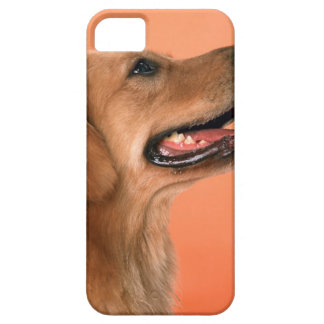 Golden Retriever 7 iPhone 5 Cover
