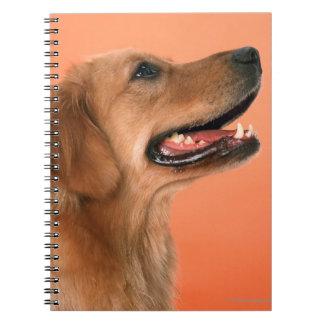 Golden Retriever 7 Notebook