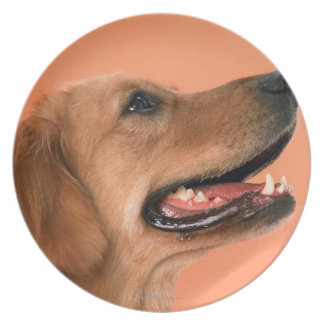 Golden Retriever 7 Plate