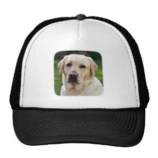 Golden Retriever Baseball / Trucker Hat